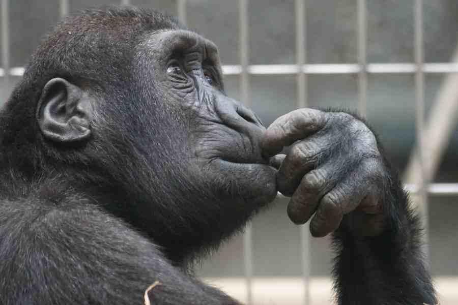 primate-1019101_1920x900